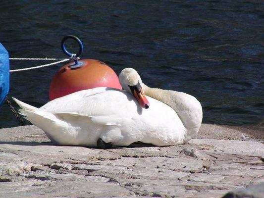 Siesta am Gardasee