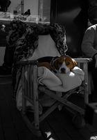 Siesta del Perro