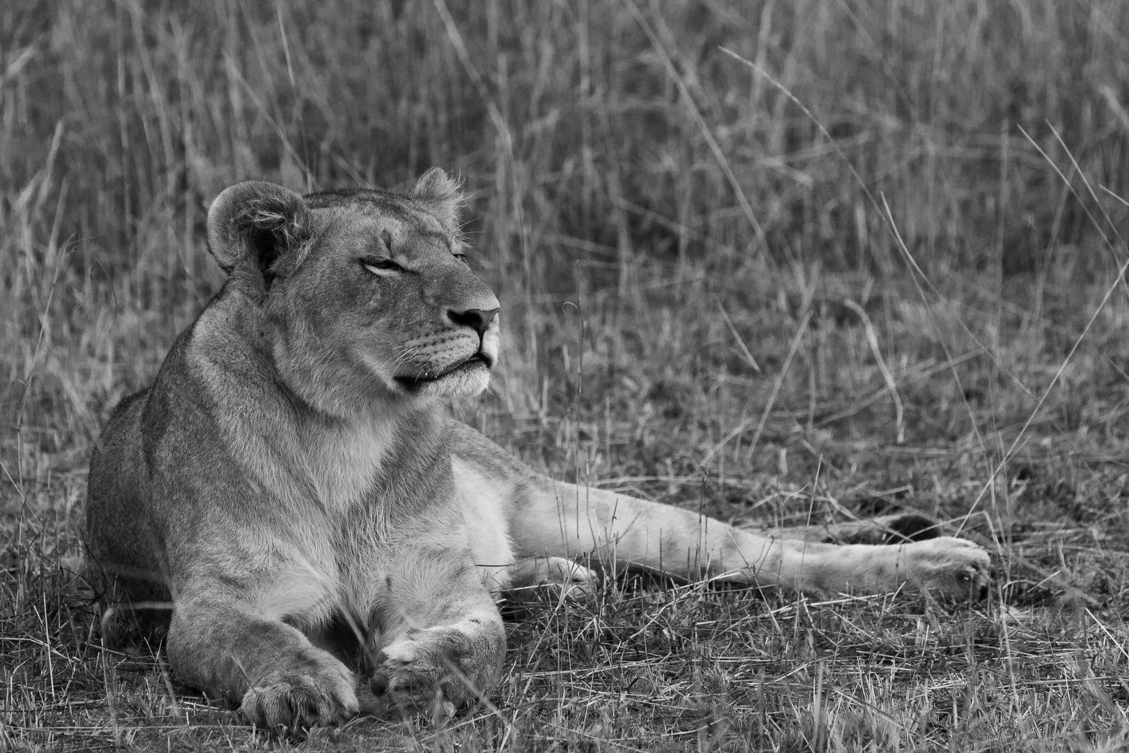 Siesta in der Mara...