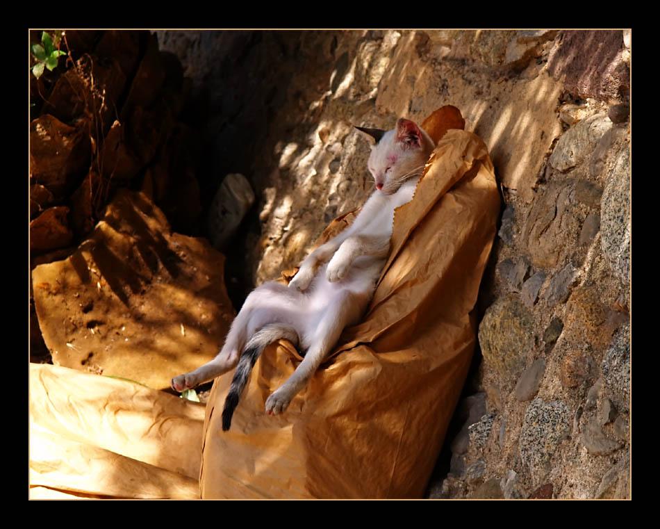 Siesta in St. Llorenc de la Muga