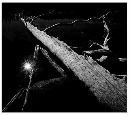 Siesta Lake, Fallen Tree