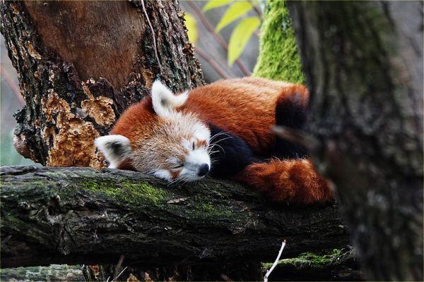 Siesta sur l'arbre en Novembre