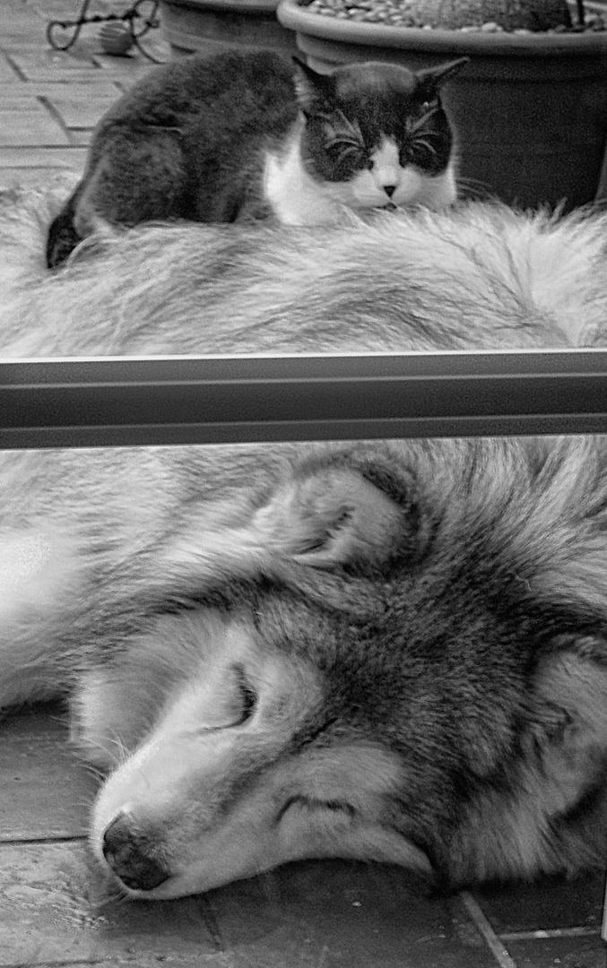 Siesta tras la ventana