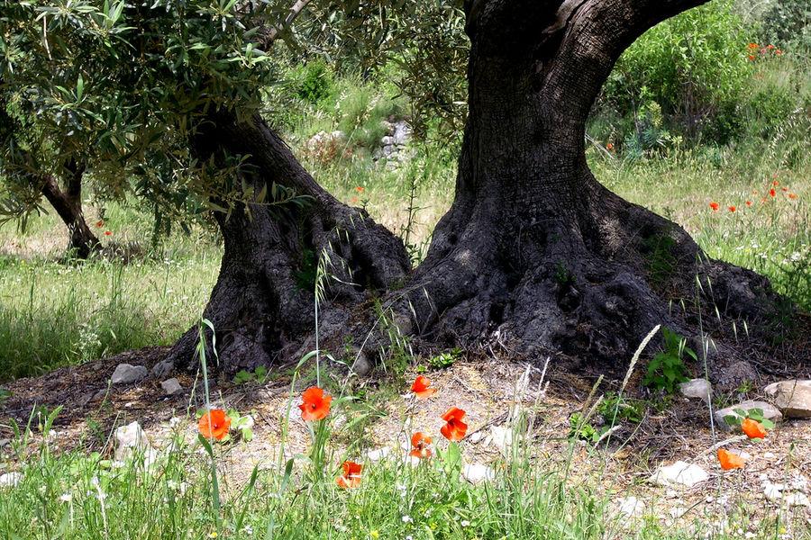 Sieste à l'ombre de la provence
