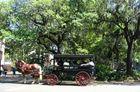 Sightseeing in Savannah