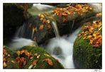 Silberbach im Herbst