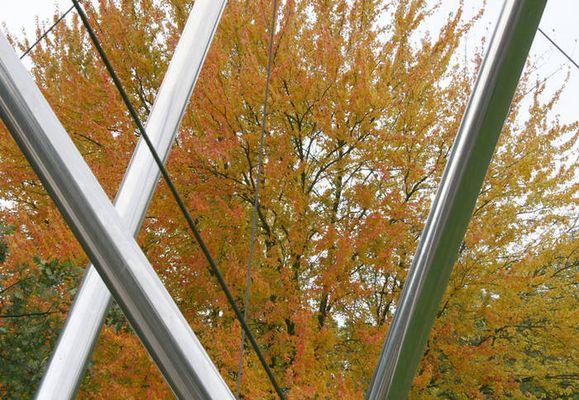 Silberner Herbstbaum
