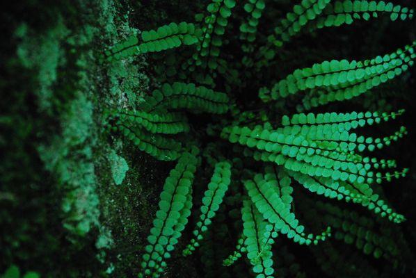 Silence green