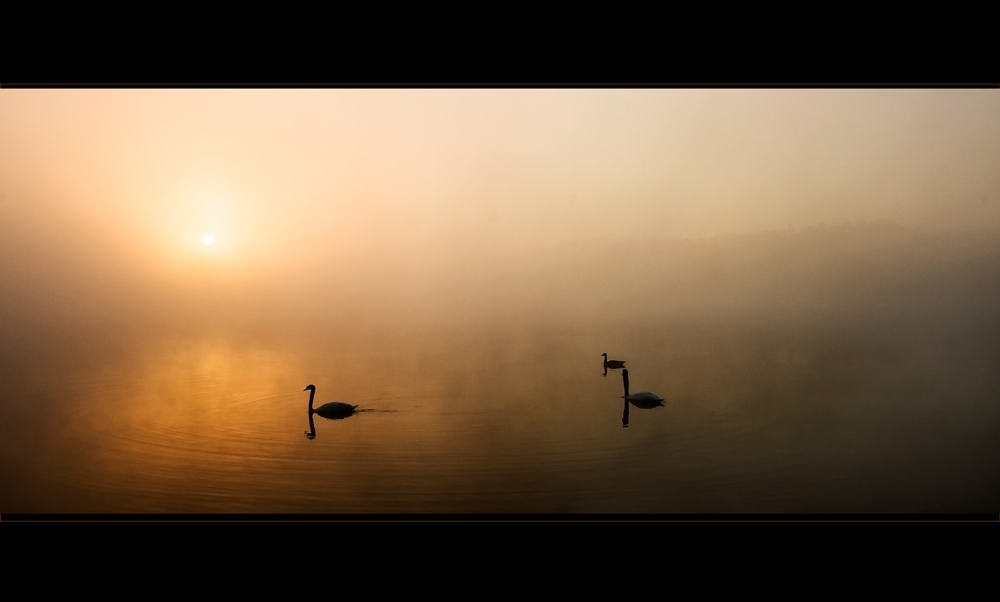 [ silence II ]