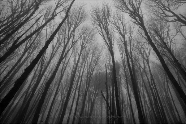 Silence In Fog 30