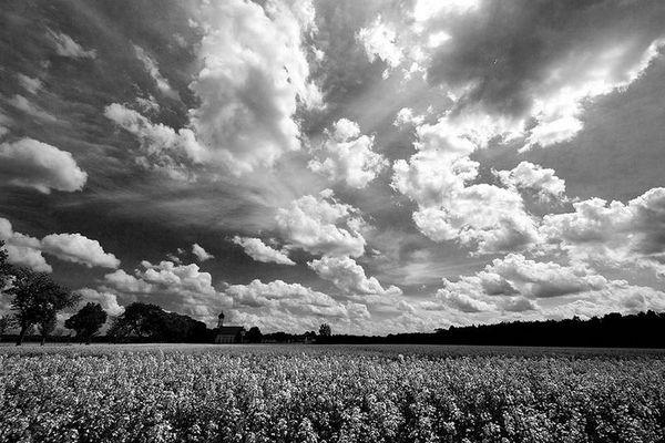 Silence in the fields