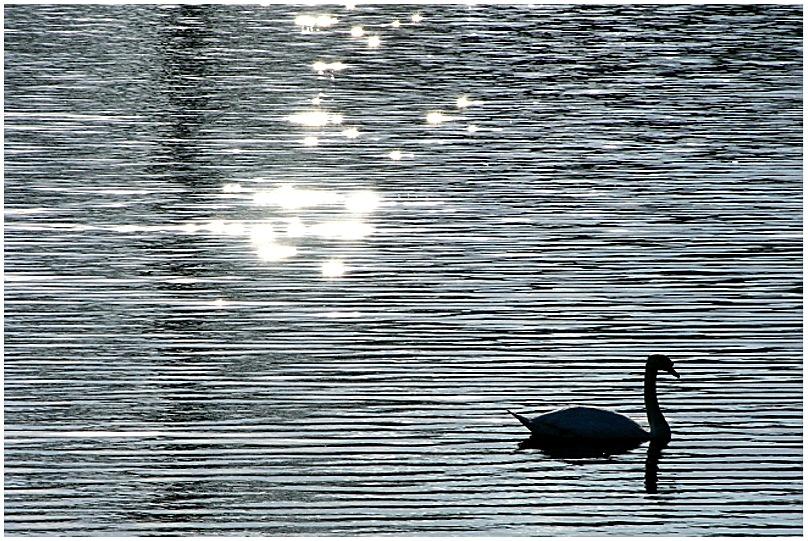 .... silence is golden ....