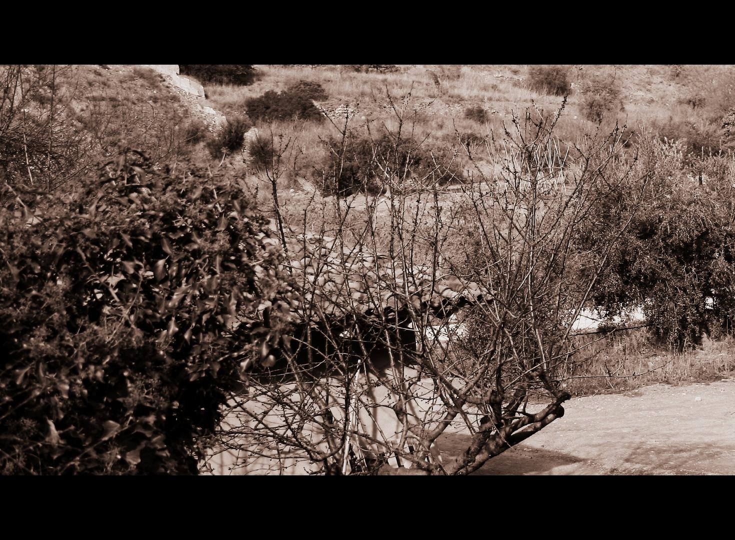 silencio en el prado......