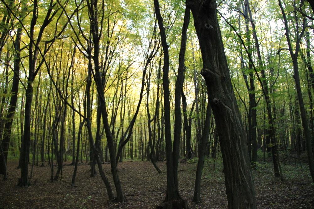 silent autumn wood