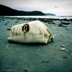 Silent death of a Buoy