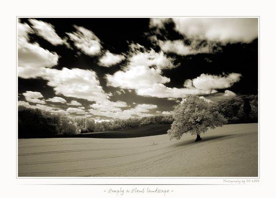 - silent landscape -