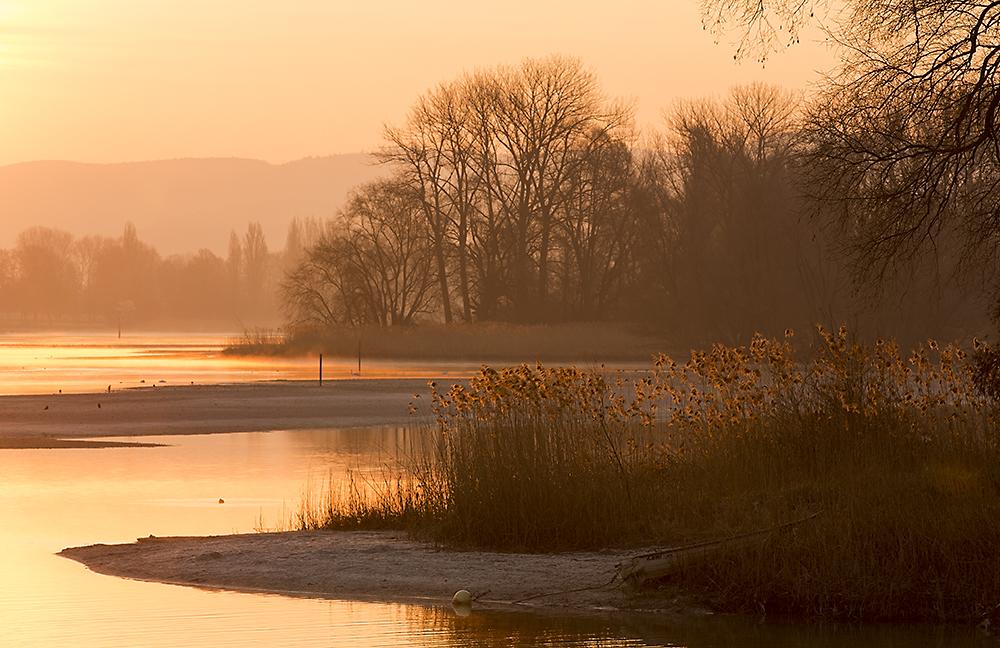 Silent Morning am Rhein