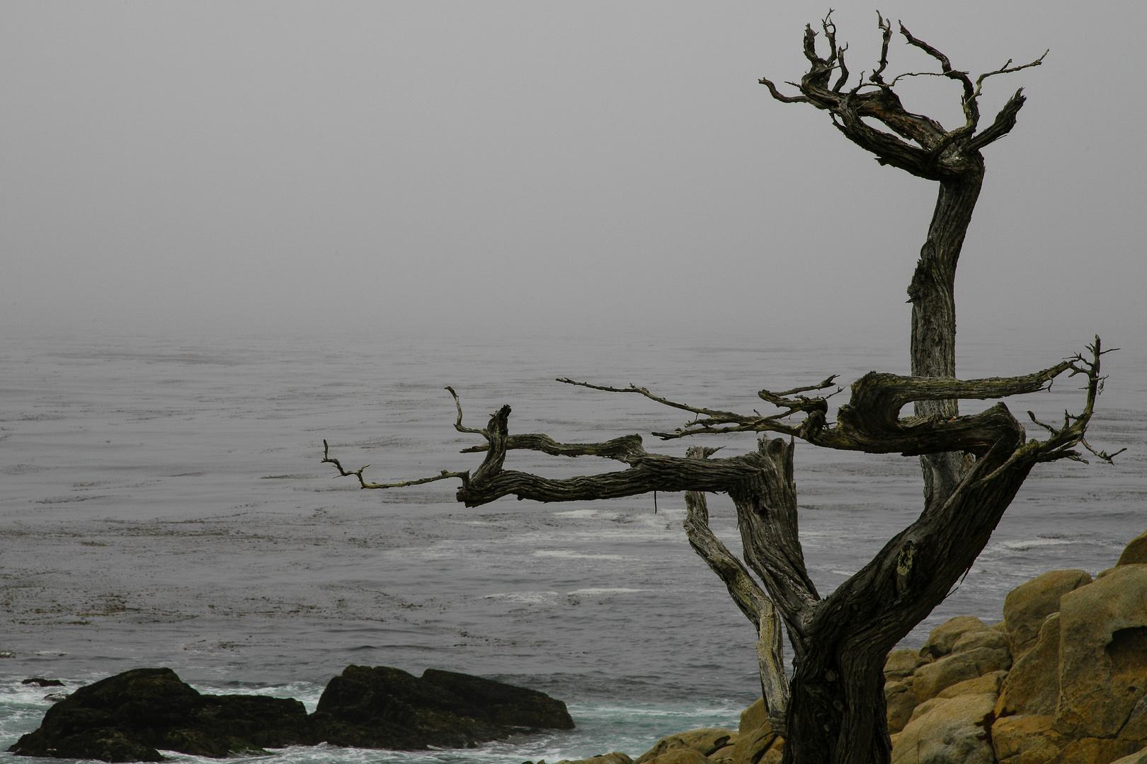 Silhouette am Meer