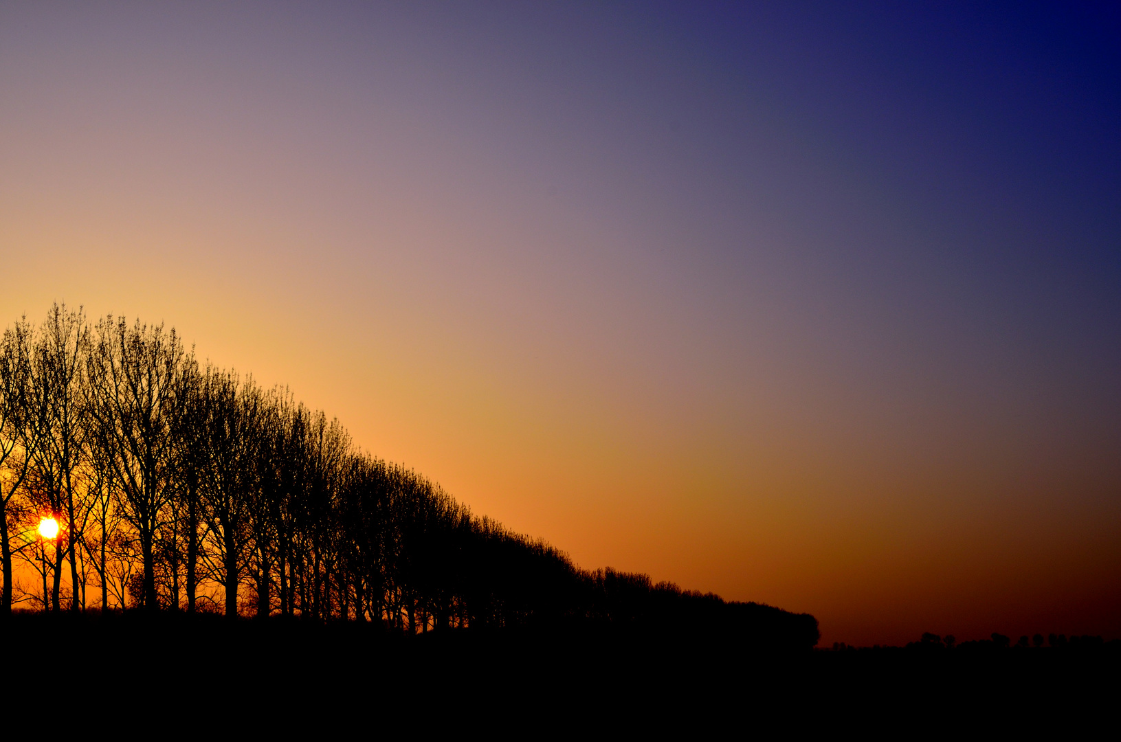 silhouette der Natur