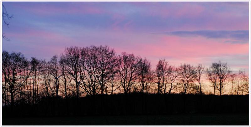 Silhouette in lila
