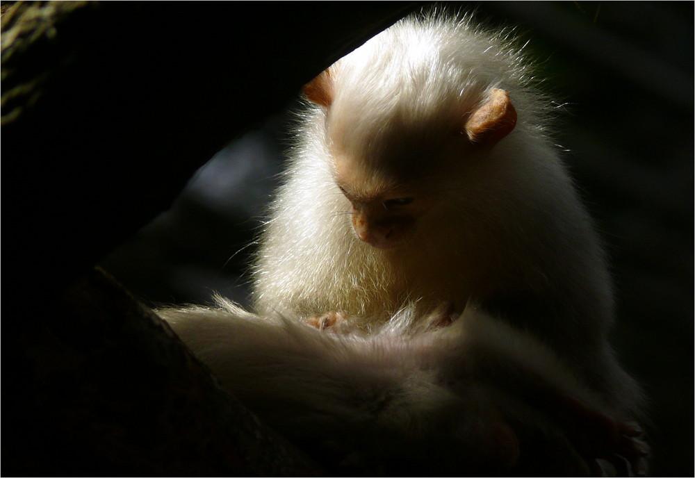 «Silky»