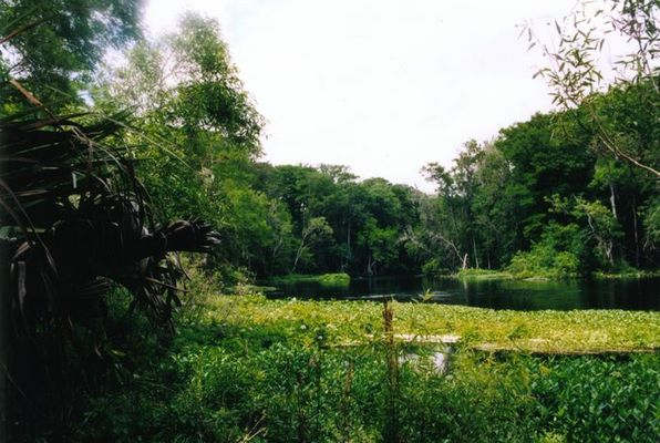 Silver River Florida