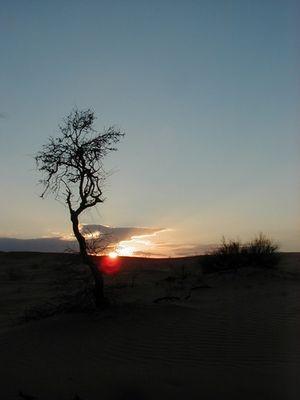 Silvesterabend in der Sahara