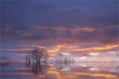 Silvestermorgen am linken Niederrhein .... oder der letzte Tag im Jahr