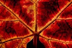simmetrie d'autunno