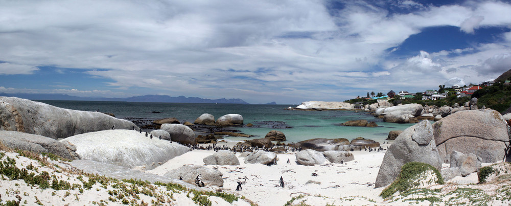 Simon's Town- South Africa