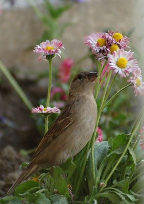 Simple as a sparrow