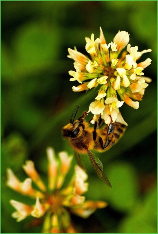 Simple... bee