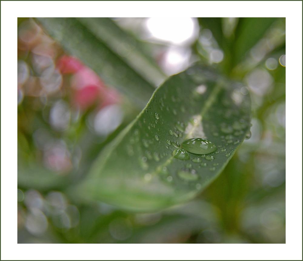 simple nature II
