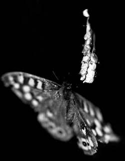 ...simple papillon...