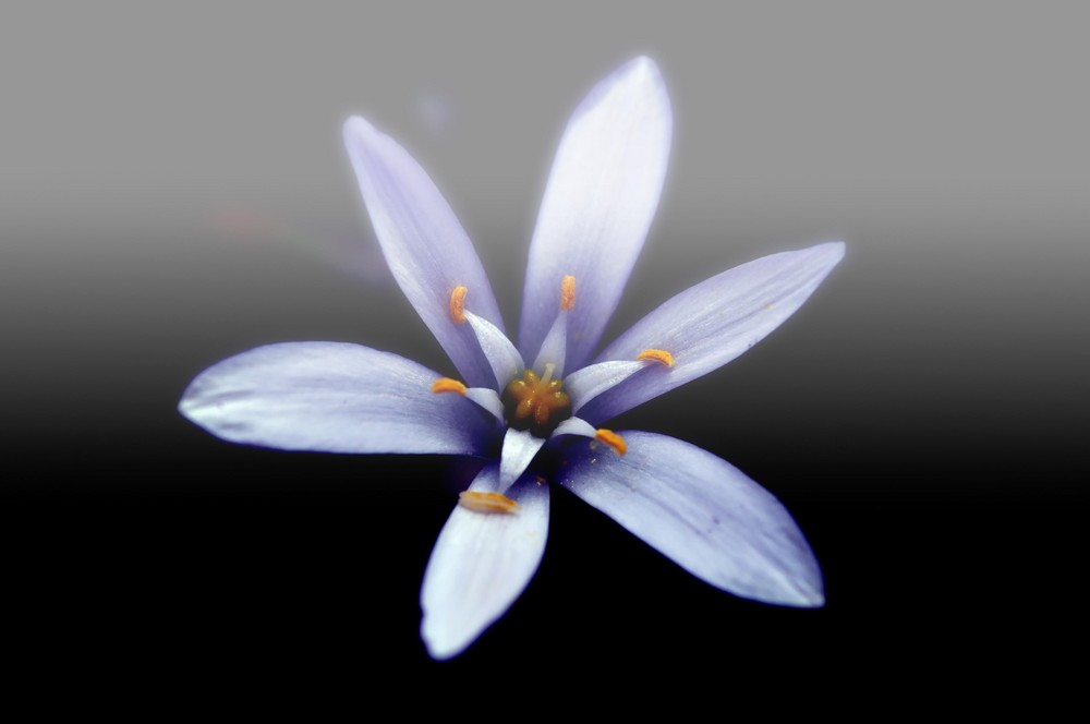 simplement fleur
