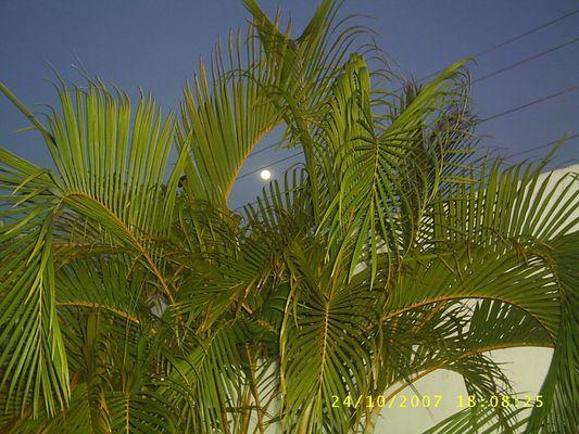 simplemente la luna apareciò..!