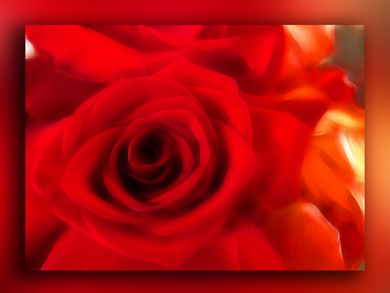simplemente rosas