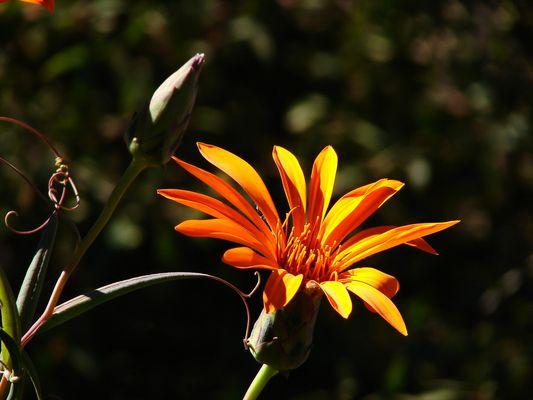 simplemente una flor