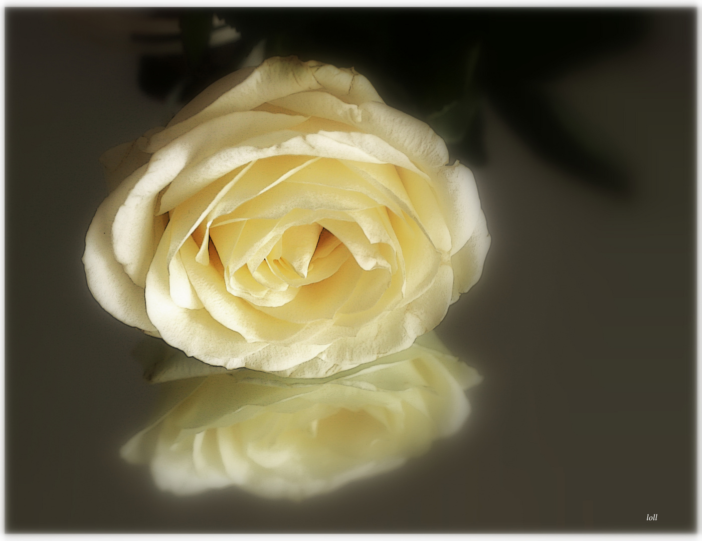..simplemente una...rosa...