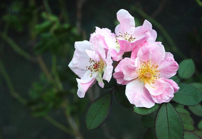 simply a flower