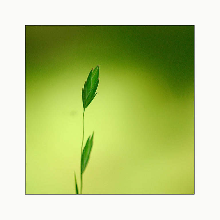 _simply in green_