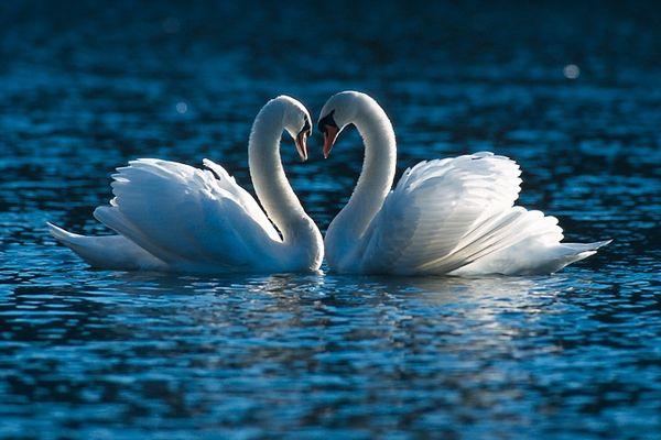 simply love II