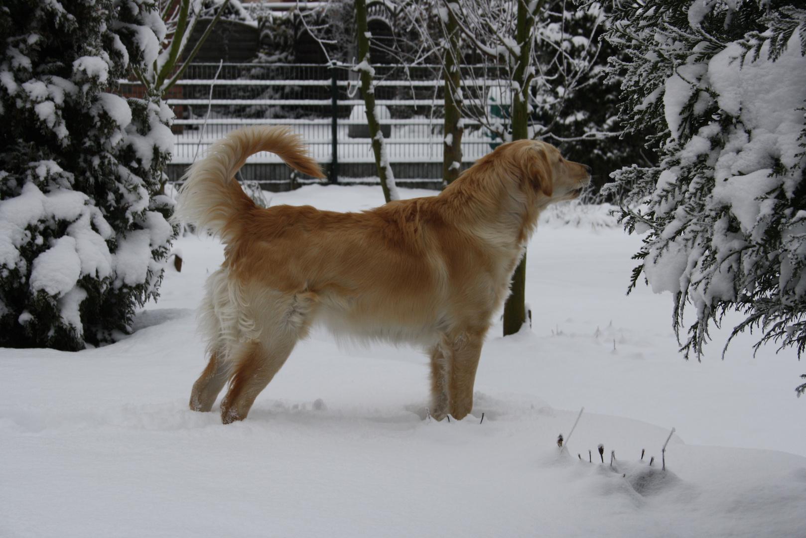 Sina im Schnee