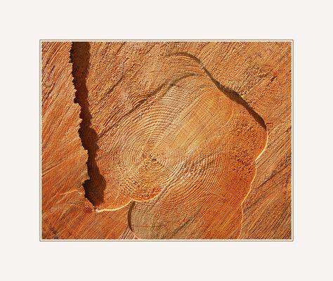 Sind alle Holzfäller Künstler ?