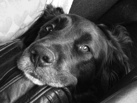 Sind Mischlinge nicht die schönsten Hunde ? ;-)