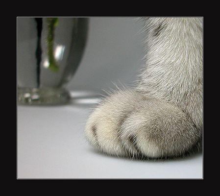 Sind so kleine Füßchen...