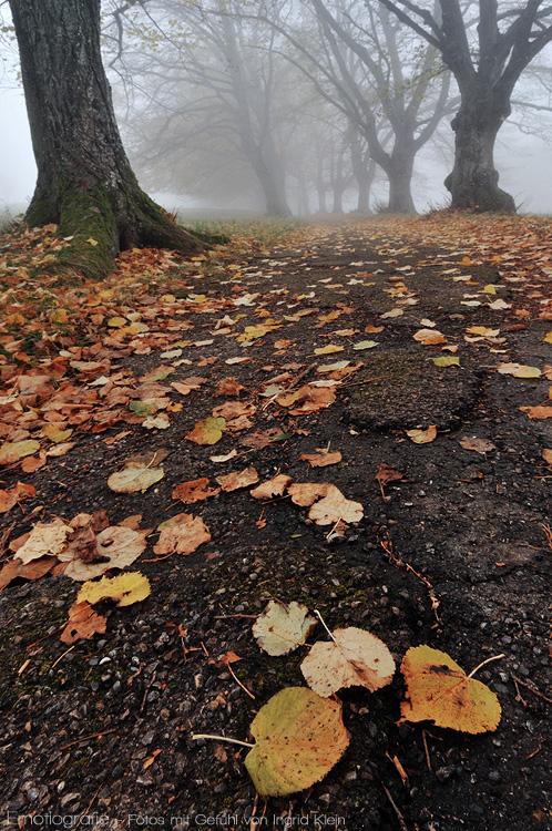 Sind wie Blätter