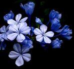 sinfonia azul