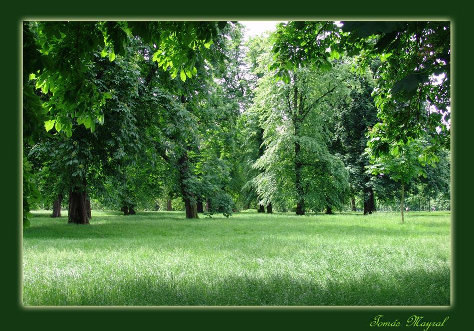 Sinfonía en Verde