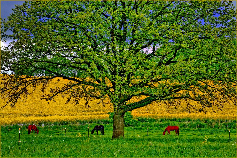 .... Sinfonie der Farben des Frühlings ....